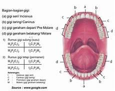 Step To Health Expert Of Dental Gambar Dan Keterangan