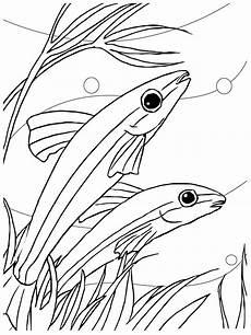 kostenlose druckbare fische malvorlagen f 252 r kinder