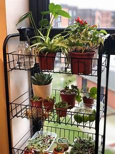 starting an indoor garden connecting east medium