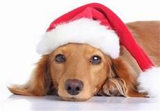 hund mit mütze digital postcard bild hund mit m 252 tze