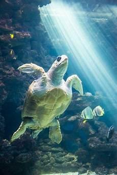 Malvorlagen Unterwasser Tiere Lustig Hintergrund Hintergrund Ozean Kreaturen
