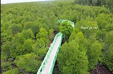 Wisata Hutan Mangrove Kota Langsa Yang Wajib Kamu Kunjungi