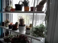Wie Oft Kakteen Gießen - wie oft muss ich meinen kaktus gie 223 en pflanzen kakteen