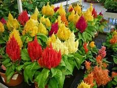 fleur vivace plein soleil plante plein soleil 12 esp 232 ces 224 fleurs jolies et rustiques