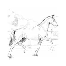 Ausmalbilder Pferde Western Ausmalbilder Pferde Malvorlagen Kostenlos Zum Ausdrucken