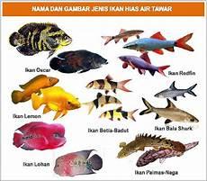 Nama Nama Ikan Hias Air Tawar Air Laut Air Payau
