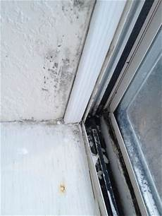 Black Mold Covering Inside Of Window On The Wood Glass