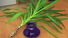 palme umtopfen wurzeln abschneiden yucca palme vermehrung