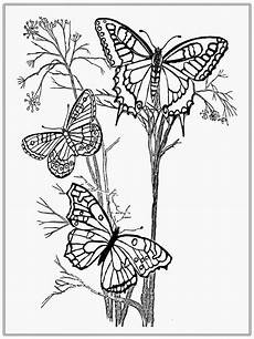 butterfly coloring book easy crafts sketch