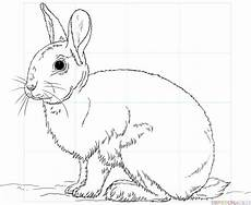 Ausmalbild Hase Sitzend How To Draw A Rabbit Step By Step Drawing Tutorials
