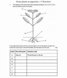 plants and photosynthesis worksheets 13616 worksheet plants worksheet grass fedjp worksheet study site