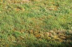 Garten Ohne Rasen 187 Sch 246 Ne Gestaltungsideen Tipps Tricks