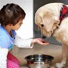 makanan untuk anjing pro readers