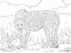 ausmalbild asiatischer gepard ausmalbilder kostenlos