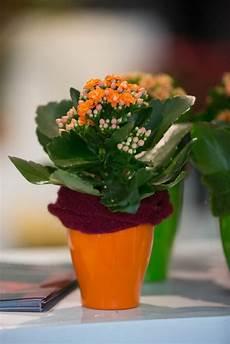 Zimmerpflanze Orange Blüte - str 228 u 223 e florales blumenecke baar
