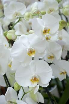 comment arroser une orchid 233 e comment arroser une