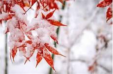 bunte pflanzen im winter die 10 sch 246 nsten arten plantura
