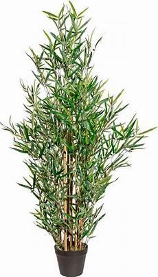 deko bambus im topf kaufen otto