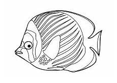 Malvorlage Fisch Din A4 Ausmalbilder Fische Krebse Seepferdchen Kraken Quallen