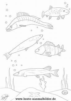 Malvorlagen Fische Hecht Fische Hecht Barsch Forelle Renken Zander Kostenlose