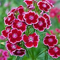 welche pflanzen mö schnecken nicht serie schneckenresistente pflanzen 2 7 fr 252 hlingsblumen