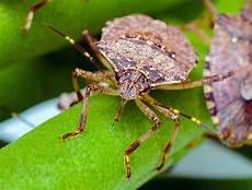 insekt an fauligem obst er mieft frisst unser obst und es gibt immer mehr davon