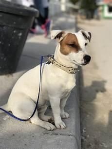 spa mulhouse chien ferrette m 226 le 17 663 p i r a patrouille d intervention