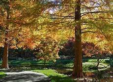 quel arbre ne perd pas ses feuilles en automne