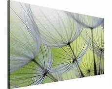 leinwandbild pusteblume leinwandbild pusteblume 75x100 cm bei hornbach kaufen