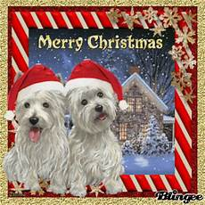 merry christmas puppies pictures photos and images for facebook pinterest and
