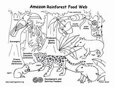 coloring pages ecosystem animals 16973 food chain coloring pages higher resolution pdf for downloading rainforest food web