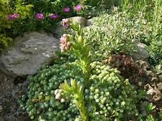 arbustes nains pour rocaille plante de rocaille conseils d am 233 nagement du jardin et photos