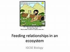 ecosystems unit by masfar teaching resources tes