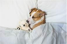 was tun bei verstopfung verstopfung beim hund symptome erkennen und richtig behandeln