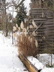 Gräser Im Winter - gr 228 ser im winter saxdorfer pfarrgarten