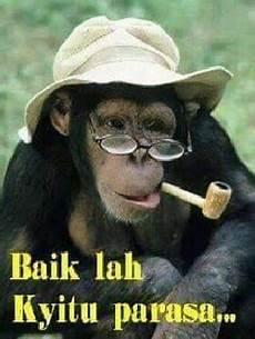 Kumpulan Meme Gambar Monyet Lucu Unik Aneh Di Dunia