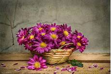 flower wallpaper for background background with beautiful magenta flowers in basket
