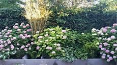 welche pflanzen passen zu hortensien pflanzen f 252 r nassen