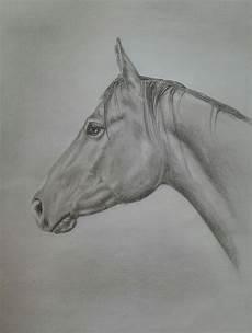 rainman zeichnung pferde bleistiftzeichnung