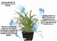 le pour plante 18550 viridis des plantes pour purifier l air