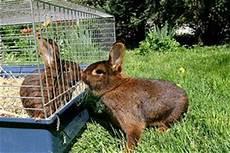Kaninchen Infos Tipps S 252 223 E Bilder