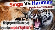 Singa Vs Harimau Pertarungan Perebutan Tahta Raja