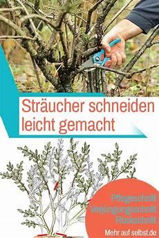 Obstbäume Pflanzen Wann - str 228 ucher schneiden baumpflege str 228 ucher garten