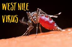 Of West Nile Virus For 2018 Confirmed Culver