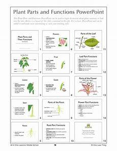 parts of the plants worksheets for grade 1 13716 middle school 8th grade all in one lesson plans only one less thing
