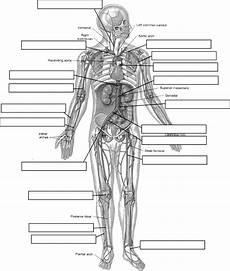 by jackie sweet anatomy physiology anatomy physiology circulatory system human
