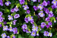 blumen klein small purple flowers of a small purple flower which