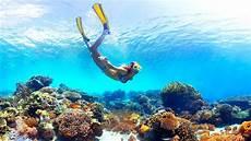 best moorea snorkeling snorkeling moorea best