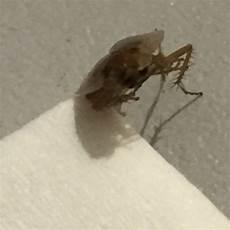 Kakerlaken In Der Wohnung Was Tun Schaben