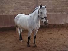 ffe trouver un cheval centre equestre de la brasserie cavalerie chevaux